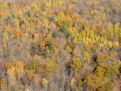 Couleurs d'automne - Fall colors @ Cubtoberfest 2010 St-Mathias CSP5 aroport airport - CSV9 hydrobase DSC_8457m (djipibi) Tags: airport rendezvous flyin rva 2010 richelieu aroport arien stmathias hydrobase csp5 cubtoberfest csv9