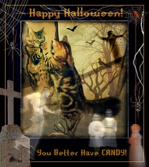 Happy Halloween (FurBabyLuv *Finally back Online) Tags: halloween monster cat spider scary october candy edited creepy spirits ghosts paranormal picnik 2010 shockofthenew kissablekat bestofcats catmoments happyhalloweeen