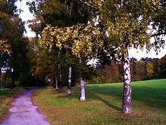 Birken amWeg , ( Aquarell-vers.) (roba66) Tags: park parque trees tree nature garden natur jardin bume garten baum birken naturaleze absolutelyperrrfect