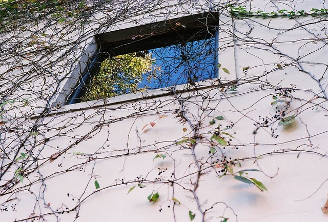 vines and window