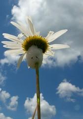 Spittle Bug (J-Fish) Tags: sky flower macro nature clouds insect spit spittlebug froghopper z612 kodakz612 5bangs