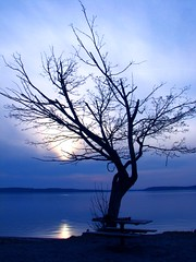 Am I Blue? (mistymisschristie) Tags: blue sunset tree water bench washington explore depressed hazy sunnyside steilacoom globalvillage aclass naturesfinest supershot flickrsbest flickrstars photoshopelements3 abigfave goldmedalwinner anawesomeshot amazingshots superbmasterpiece goldenphotographer mistymisschristie top20blue lunarvillage elpasojoes frhwofavs anythingdigital empyreanlandandcityscapes july2nd2007 cmwdblue top20everlasting goldstaraward top30blue top30winner