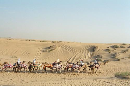 Camel Caravan 2