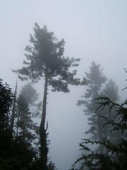(Kaafoor) Tags: trip pakistan vacation holiday colour nature beauty fog clouds haze pakistani vacations nwfp gali murree nathiagali nathia specnature