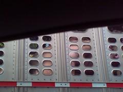 Pig Truck 2 (frogwasteland) Tags: cameraphone truck pig bacon meat transportation frogwasteland pigtruck