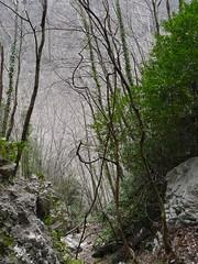 la foresta incantata (giò-giò) Tags: campania nebbia paesaggi otw escursioni mycameraneverlies lerkaminerka