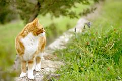 Hella (Vlien*) Tags: flowers cute nature animal cat canon 50mm spring bokeh kitty f18 poes animalplanet bestofcats