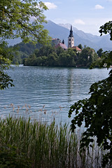 Lake Bled (Shelley & Dave) Tags: lake church water reeds island slovenia bled glaciallake pilgrimagechurchoftheassumptionofmary