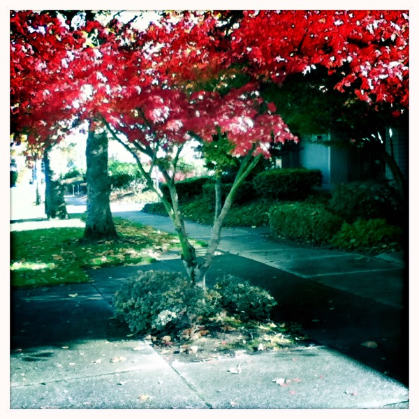 Fall Color w/new iPod Touch 2