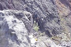 _IGP4790 (Razzcal) Tags: volcano agung