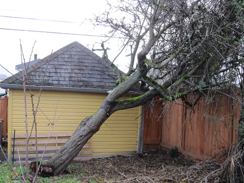 November 15th wind storm 003