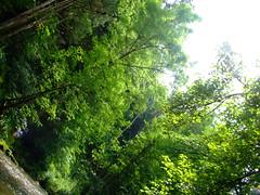 DSCF5991 (sza525) Tags: black forest germany deutschland south schwarzwald schluchsee feldberg sddeutschland