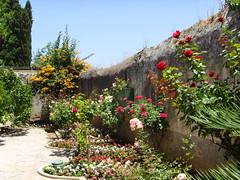 Courtyard garden at Mazra