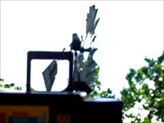 Looking at the world through the ansco 50 (again) (ǝlɐǝq ˙M ʍǝɥʇʇɐW) Tags: film texas kodak 110 ansco 2007 viewfinder 2k7 texaswindmill ansco50