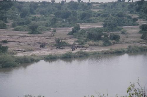 Uganda - QENP Elephants Remote