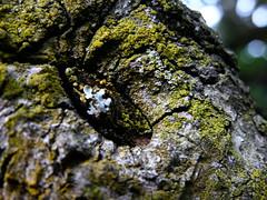 Prehistoric..... (ineedathis, the older I get, the more fun I have!) Tags: tree searchthebest bark soe naturesfinest supershot impressedbeauty dogwoodbark