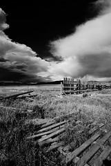 Antelope Flats, Grand Teton National Park - 8.1 (my hovercraft is full of eels) Tags: montana idaho snakeriver yellowstone wyoming bison grandteton abhijit oldbarn grandtetonnationalpark jacksonlake tetonvillage mormonrow pronghornantelope antelopeflats