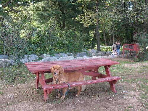 waiting for ice cream