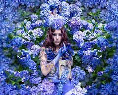 Wonderland : The Secret garden (Kirsty Mitchell) Tags: blue girl fairytale magic butterflies fantasy wonderland storybook natasha hydrangeas enchanted storyteller thesecretgarden kirstymitchell elbievaneeden silkbutterflieshandcutfromavintagekimono