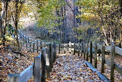 trail into the wood (Refocus Photography) Tags: bridge autumn trees sun fall leaves forest outdoors shadows branches trail