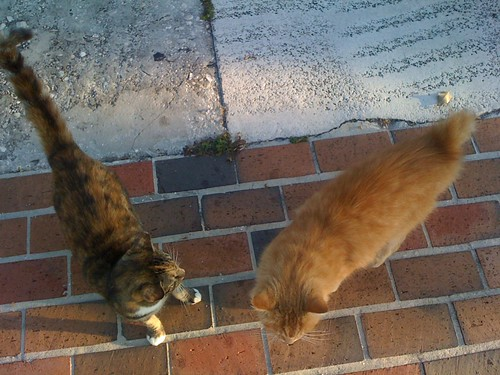 Palm Beach stray cats