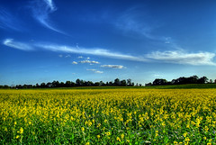 Yellow And Blue (Jamie Amodeo) Tags: blue ontario canada yellow clouds book bravo stirling picasa olympus hdr feilds e500 photomatix magicdonkey evolt500 mondocafe anawesomeshot impressedbeauty superaplus aplusphoto diamondclassphotographer jamieamodeo
