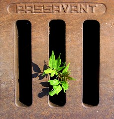 Ha! I found the right way! (michaelab311) Tags: hello up power geometry yes drain explore strength curious lookingdown hehehe kraft determination hereiam breakingout gully iwillsurvive neugierig naturewins gullydeckel blueribbonwinner intothelight supershot thewayout keeptrying outstandingshots explore168 willenskraft abigfave artlibre passavant colorphotoaward aplusphoto flickrjobdiff 200750plusfaves irresistiblebeauty diamondclassphotographer flickrdiamond dontgiveuphope uptothelight