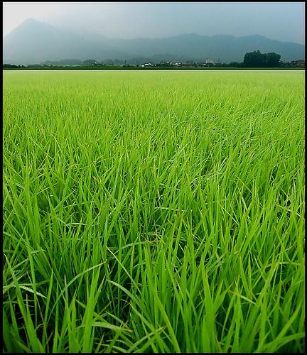 http://farm2.static.flickr.com/1388/857055259_218b701fcb.jpg