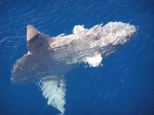 24 Mahluk Aneh Monster Laut Dalam
