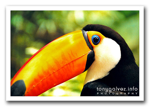 Top 10: lugares para ver fauna salvaje
