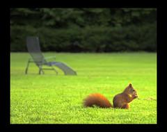 Hammy, the hyperactive squirrel at Mannheim Luisenpark - by Felicea