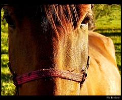 Força bruta / Heavy strength (Fla Barbieri (Cokin Girl)) Tags: horse verde green nature sony natureza cargo h1 cavalo carga animaladdiction duetos
