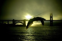 Sunset, San Francisco (Shuck) Tags: sanfrancisco california bridge sea storm bird wow puente interestingness bravo unitedstates quality seagull great tony explore selected goldengatebridge eua canon5d estados unidos shuck explored stuning madeexplore ricardoshuck anawesomeshot superbmasterpiece byshuck tonyshuck