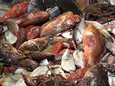 poissons de roche.jpg