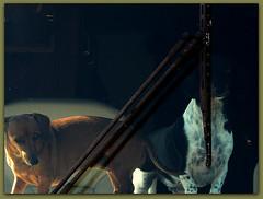 dogs animals fun motorhome
