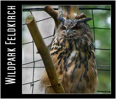 Wildpark Feldkirch - Austria (Lars Tinner) Tags: sterreich bird austria feldkirch vogel eule vorarlberg wwwtinnersg httpwwwtinnersg tinnersg
