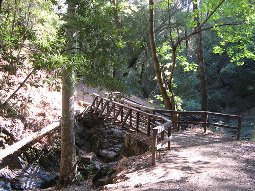 A bridge in the woods