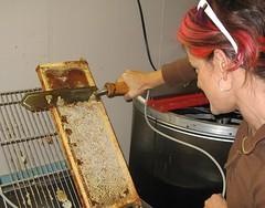 Beekeeping 2633