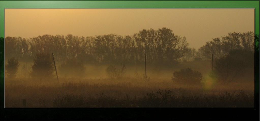 the Fog...