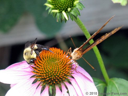 Pollinator Party 6