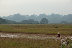 Farmer in the rice fields, near c Kh, M c rural district (former H Ty province), Hanoi, Vietnam - Wednesday, 6th October 2010 (Lumire en juin) Tags: mountains hat rural landscape vietnam farmer ricefields conical   hty  chahng     mc ckh hngtch