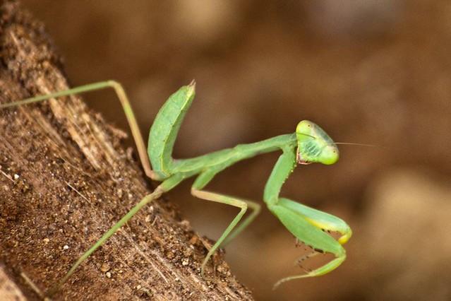 A Grasshopper with Attitude