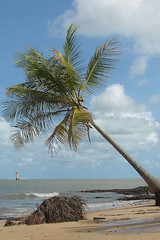 (charlotte spode) Tags: beach nature water brasil clouds places farol riosofrancisco sergipe brejogrande cabeo sonyh2