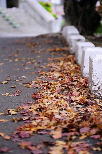 校門口坡提道落葉