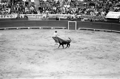 070870 08 06 (ndpa / s. lundeen, archivist) Tags: plaza blackandwhite bw monochrome mexico blackwhite fight mexicocity nick july bull ring mexican cape 1970 1970s bullfight bullring bullfighting dewolf matador plazadetoros banderillas nickdewolf photographbynickdewolf plazaméxico plazadetorosdeméxico terciodemuerte