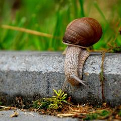 Negotiating the Curb (andertho) Tags: delete2 climb snail save3 poland polska save8 delete delete4 save save9 save4 save5 save10 save6 curb