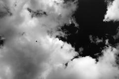 clouds.bird.60.jpg (paulmoore) Tags: leica dmr r9