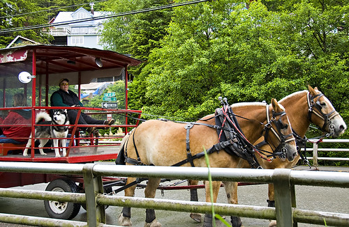 Tourist Trolley Ketchikan