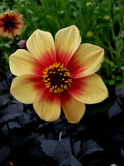 Happy Flower (czd72) Tags: flower happyflowers
