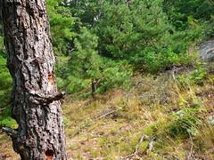 P1030498.jpg (airwaves1) Tags: 1000islands stlawrenceriver july282007 yeoisland